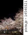 夜桜 ライトアップ 桜の写真 14540321