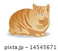キャット ベクター 猫のイラスト 14545671