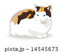 三毛猫 14545673