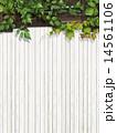 ツタ 葉 壁のイラスト 14561106