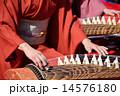 琴の演奏 14576180