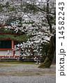 染井吉野桜 平安神宮平安神宮 ソメイヨシノの写真 14582243