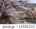 川 ソメイヨシノ 春の写真 14582321