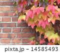 壁 壁面 葉の写真 14585493