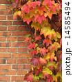 壁面 壁 葉の写真 14585494
