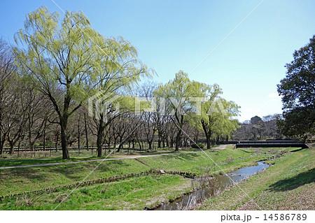 早春の野川公園(柳橋付近) 14586789