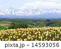山並み 花 山の写真 14593056