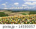 山並み 花 山の写真 14593057