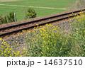 レール 菜の花 芥子菜の写真 14637510