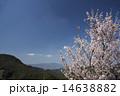 梅 空 花の写真 14638882