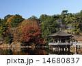 11月秋 紅葉の浮見堂  奈良公園の秋景色 14680837