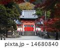 11月秋 紅葉の手向山八幡宮  奈良公園の秋景色 14680840