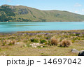 ルピナスとテカポ湖 14697042
