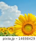 明るい ブルー 青の写真 14698429