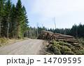 林業 道端 道ばたの写真 14709595