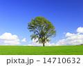 麦畑 ポプラ 雲の写真 14710632