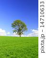 麦畑 ポプラ 雲の写真 14710633