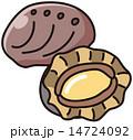貝類 鮑 活あわびのイラスト 14724092