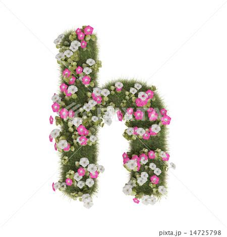 アサガオのアルファベット 14725798