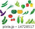 ベクター 食材 トマトのイラスト 14728517