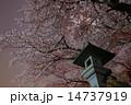 護国神社 夜桜 桜の写真 14737919