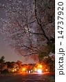 護国神社 夜桜 ライトアップの写真 14737920
