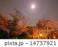 護国神社 夜桜 ライトアップの写真 14737921