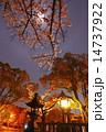 護国神社 夜桜 ライトアップの写真 14737922