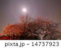 夜桜 ライトアップ 桜の写真 14737923