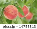 果物 ピーチ 桃の写真 14758313