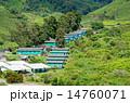 高原地方 お茶 茶の写真 14760071