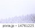 ニセコ 針葉樹 14761225