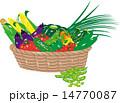 ベクター 野菜 収穫のイラスト 14770087