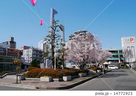 岩倉駅西口 駅前ロータリーのさくら 14772923