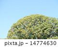 明治神宮 14774630