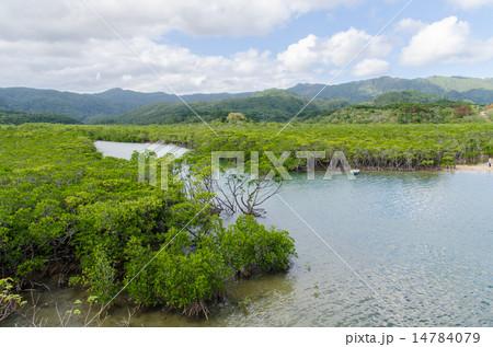 沖縄県 西表島 後良川 14784079
