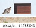 白い壁と窓 14785643