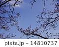 空 春 蕾の写真 14810737