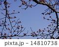 空 春 蕾の写真 14810738