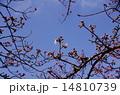 空 春 蕾の写真 14810739