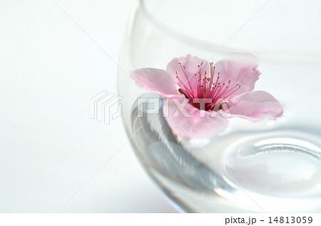 ブランデーグラスと桃花1の写真素材 [14813059] - PIXTA