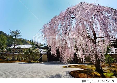 春の京都 高台寺 14815719