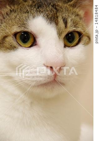 精悍な顔つきの猫 14818484