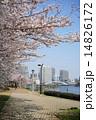 隅田川テラス 染井吉野 隅田川の写真 14826172