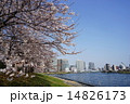 隅田川テラス 染井吉野 隅田川の写真 14826173