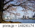 隅田川テラス 染井吉野 隅田川の写真 14826174