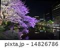桜のライトアップ 14826786