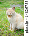ねむた猫 14826788