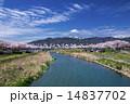 こいのぼり 川 雲の写真 14837702