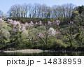 湖岸 芽吹き 花の写真 14838959